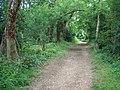 Bridleway near Badbury Rings - geograph.org.uk - 1437961.jpg