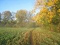 Bright autumn morning - geograph.org.uk - 2674960.jpg