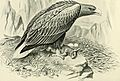British birds with their nests and eggs (1896) (14747475321).jpg