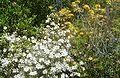 Brookgreen Gardens12.jpg
