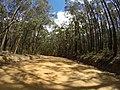 Brooman NSW 2538, Australia - panoramio (100).jpg