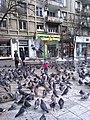 Bucuresti, Romania. Porumbei, porumbei...pe Magheru. Un copil hranind porumbeii.jpg