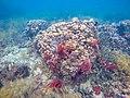 Bunte Korallen (27048848451).jpg