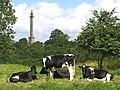 Burton Pynsent Monument - geograph.org.uk - 1577466.jpg