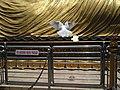 Burung Merpati.jpg
