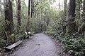 Bush Walking (18764348614).jpg