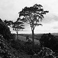 CH-NB - Belgisch-Kongo, Thysville (Mbanza Ngungu)- Landschaft - Annemarie Schwarzenbach - SLA-Schwarzenbach-A-5-26-016.jpg