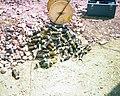 COAL GASIFICATION, NEVADA TEST SITE - DPLA - 93e4e7aa5f2206cdb3ddfb09a87c60b8.jpg