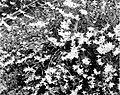 COLLECTIE TROPENMUSEUM Orchidee bij de woning van de Hoofdadministrateur van de Singkep Tin Mij TMnr 10006387.jpg