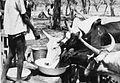 COLLECTIE TROPENMUSEUM Runderen worden gedrenkt bij een waterpomp van het vestigingsproject Koulipele in Kaibo TMnr 20010686.jpg
