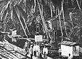 COLLECTIE TROPENMUSEUM Vlotten en kokospalmen bij een paalwoning aan de Barito-rivier TMnr 60018696.jpg