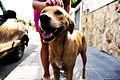 Cachorro de rua.jpg