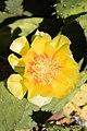 Cactus Chicago Illinois 8580.jpg