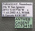 Camponotus fiebrigi casent0173418 label 1.jpg