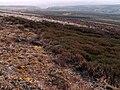 Candlerush Moor - geograph.org.uk - 398670.jpg