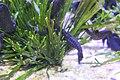 Capetown - Two Oceans Aquarium IMG 9455.JPG