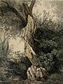 Carl Gustav Carus - Geborstener Baumstamm (1812).jpg