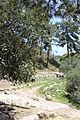 Carmel Park. Oren Wadi IMG 8953.JPG