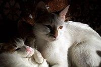 Портал кошки фотогалерея пород