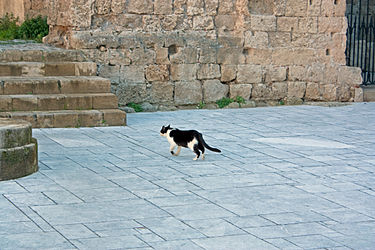 Cat at the Church of the Virgin of the Burgh.jpg