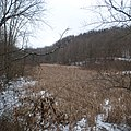 Center Branch Wildlife Management Area - Wetlands in Winter-square.jpg