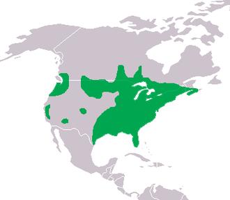 Centrarchidae - Image: Centrarchidae dis