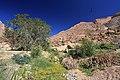 Cesta ke skalním malbám v masívu Brandberg - panoramio (2).jpg