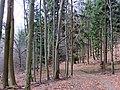 Cesta pod Vysokým vrchom - panoramio.jpg