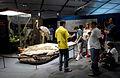 Charles Darwin 200 year exhibition Brazil2.jpg