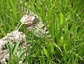 Chasing Butterflies (8433718782).jpg