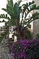 Che tipo di pianta è - panoramio.jpg