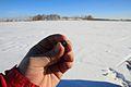 Chebarkul meteorite sample.jpg