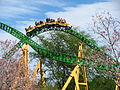 Cheetah Hunt hill.jpg