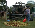 Cider apple pressing at Open Day, New Forest Cider 2008 - geograph.org.uk - 1011443.jpg