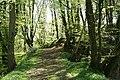 Clayhanger, Brockham Wood - geograph.org.uk - 164622.jpg