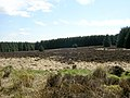 Clearing in Auchencairn Forest - geograph.org.uk - 160281.jpg