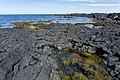 Coast, Snæfellsnes, Iceland 04.jpg
