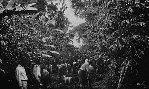 Coffee production in Costa Rica - Early plantation workers in Costa Rica