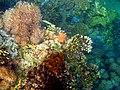 Colorful underwater world, Mabini Batangas - panoramio (9).jpg