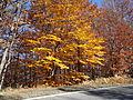 Colori d' autunno.JPG
