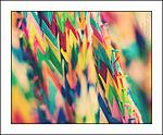 Colours of Peace (5061416867).jpg