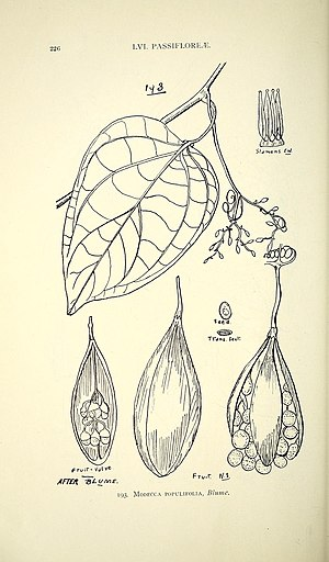 Comprehensive catalogue of Queensland plants, both indigenous and naturalised. To which are added, where known, the aboriginal and other vernacular names; with numerous illustrations, and copious (14596157920).jpg