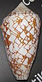 Conus textile (textile cone snail) 2 (24425421465).jpg