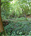 Copse near Waggoners Farm, Russ Hill, Charlwood, Surrey - geograph.org.uk - 31399.jpg