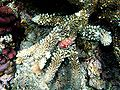 Corals and shell.JPG