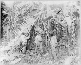 Trade unions in Costa Rica - Banana workers in Limón between 1910 and 1920