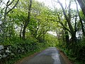 Country lane - geograph.org.uk - 120145.jpg