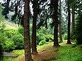 Cragside Estate - geograph.org.uk - 920046.jpg