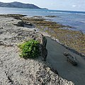 Crocodile Island, Palaui, Cagayan.jpg