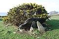 Cromlech Caer-dyni Burial Chamber - geograph.org.uk - 713405.jpg